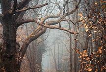 mistig woud
