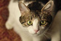cat / my cat
