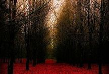 Treehuggin / by Melanie Gottshalk