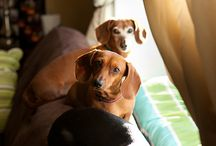 Doxie Love / by Kristin Snyder