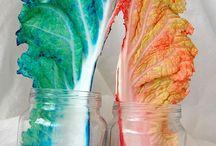 Classroom Math & Science / by Roxanne Kessler