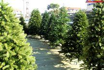 Χριστουγεννιάτικα / Τα καλύτερα Χριστουγεννιάτικα δέντρα και στολίδια που κυκλοφορούν στην αγορά!