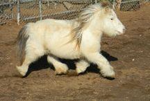 Alma's horses