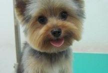 dogs haircut