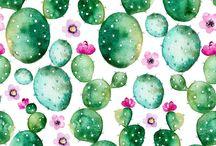 Succulent Illustrations