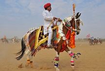 Horses and Tack from Around the World