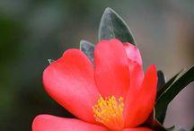 Flora of SBG / Beautiful pictures of flowers seen at Singapore Botanic Gardens