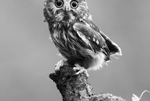 Owls / by Sherry Peck