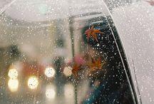 Automne / Autumn