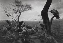 Hiroshi Sugimoto / «Мои фотографии, — пишет художник, — существуют в неком пространстве между предметами, вводящими в заблуждение, и пребывающими в заблуждении зрителями».