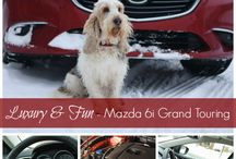 Awesome Car Reviews / Cars that are great to drive and are dog friendly