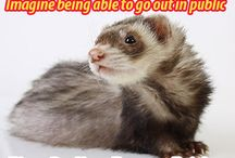 FIve Dollar Ferret Fridays / Help support ferret legalization in California by donating $5 to legalization efforts every Friday.  http://legalizeferrets.org/support/ferret-friday.html
