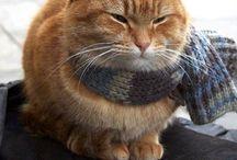 CAT / ネコ可愛いもの