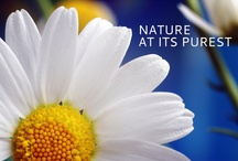 Eco chic  / Natural and pure beauty