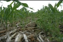 Cover Crops / by Brian Scott