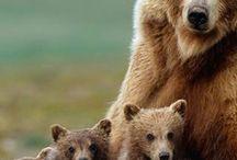 bears<3