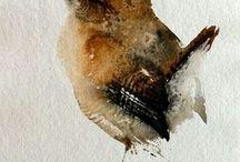 Birds in Art / Bird drawings and paintings.