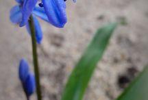 Bloemen / Fotografie