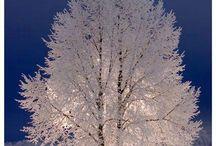 Cg mat tree