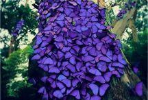 Butterflies / by Tash