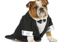 Wedding Dogs / #dogs #ideas #wedding #planner #beachweddings #modernweddings #sandiego #delmar #ranchosantafe #ca