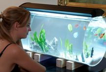 akvaria