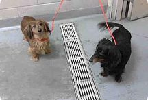 Doxie's need Home / by Lynn Mundinger
