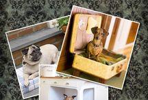 Puppy love! / by Savana Brown
