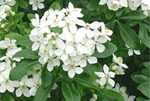 Listing plantes