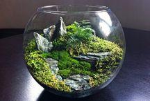 Mini ecosysteem