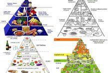 Bazele nutritiei, tablelul alimentelor