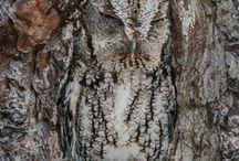 literally a tree owl