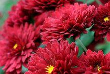 Signification fleurs.....
