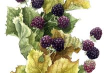 Fruits and Berrys / Illistrations art study / by Jeanne Allen