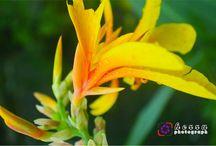 bunga file