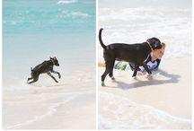 Caribbean vacation and pets