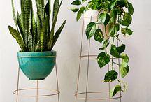 Indoor plants/Decor