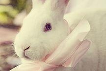 Easter / by Amanda Finkenbine