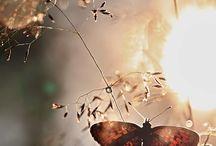 FEMIE / Vlinders
