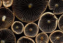 bos structuren en organismen