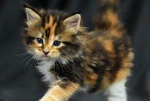 kitty cat's <3