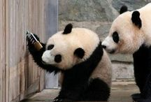 ♥ Pandas / by Leticia Schinestsck