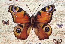 Dekupaj Desenleri Kelebek