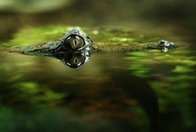 Surface Tension / by Nick Peall