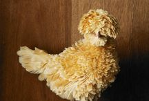 Chicken / by Danny Troop