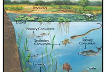 Ecosystems / biomes