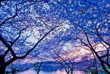 beautiful things (mostly blue!) / Beautiful blue