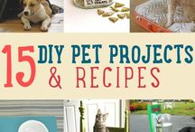 DIY Pet Projects to improve their lives