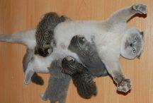 gatti e altri cari amici animali