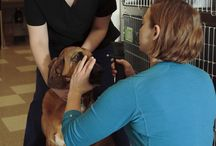 Clarendon Animal Care / A brand-new, state of the art veterinary facility that just opened Jan, 5 2014 in Arlington, VA